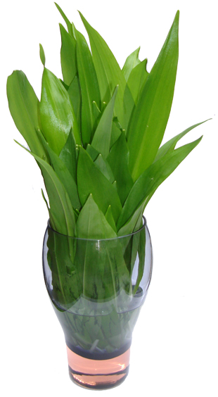 A bunch of wild garlic in a glass